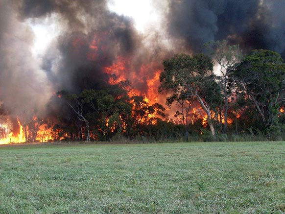 ऑस्ट्रेलिया के जंगलों में लगी भयानक आग।