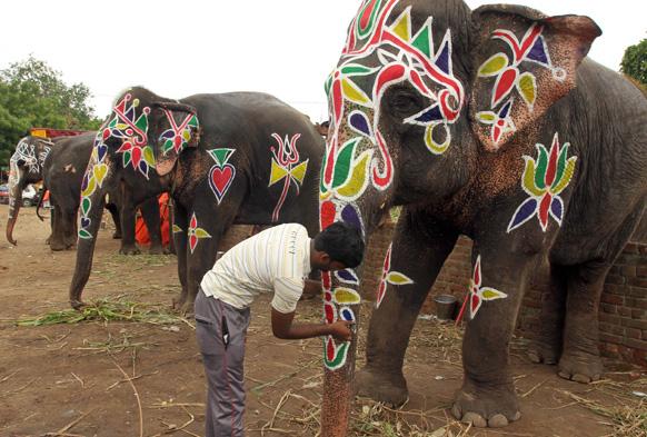 गुजरात के अहमदाबाद में रथयात्रा के लिए हाथियों का श्रृंगार करता एक व्यक्ति।