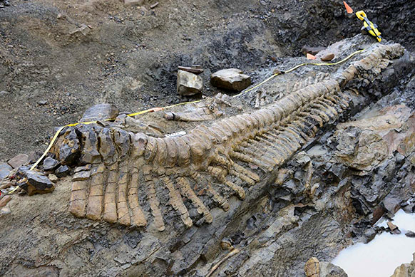 मैक्सिको में खुदाई के दौरान एक कंकाल मिला जिसके बारे में यह कहा जा रहा है कि यह डायनासोर का कंकाल है।