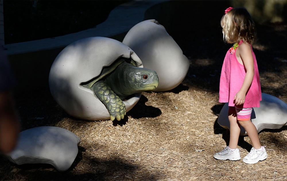 डलास के एक एडवेंचर पार्क में अंडे से कछुए को निकलती देखती एक लड़की।