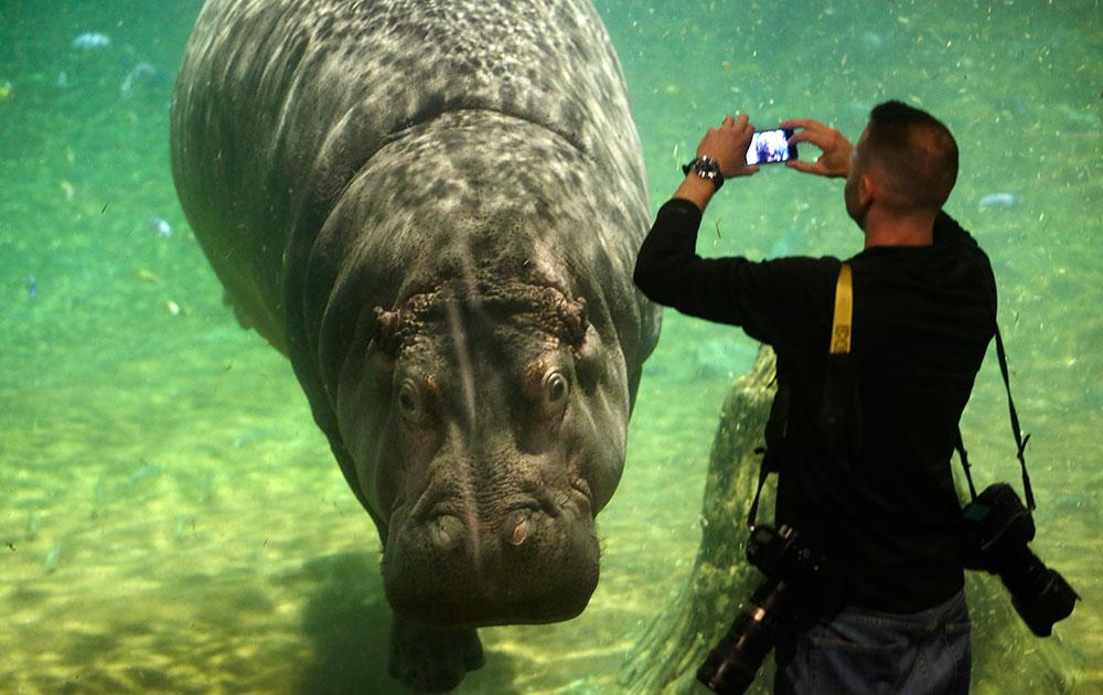 न्यूजीलैंड के कैमडेम एक्वेरियम में तस्वीर खींचता एक व्यक्ति।
