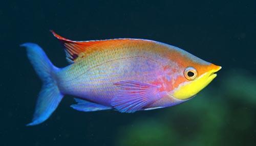 मछलियों का दिमाग इंसानों से भी तेज होता है!