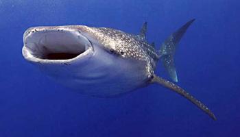 इंसानों से भी तेज होता है मछलियों का दिमाग!
