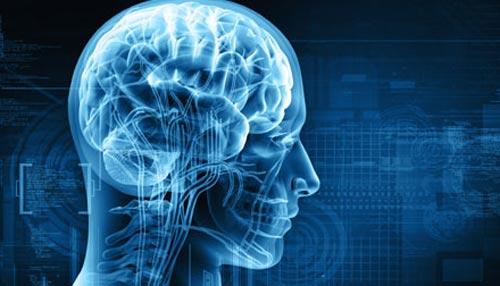 मस्तिष्क के विकास में महत्वपूर्ण है जीन