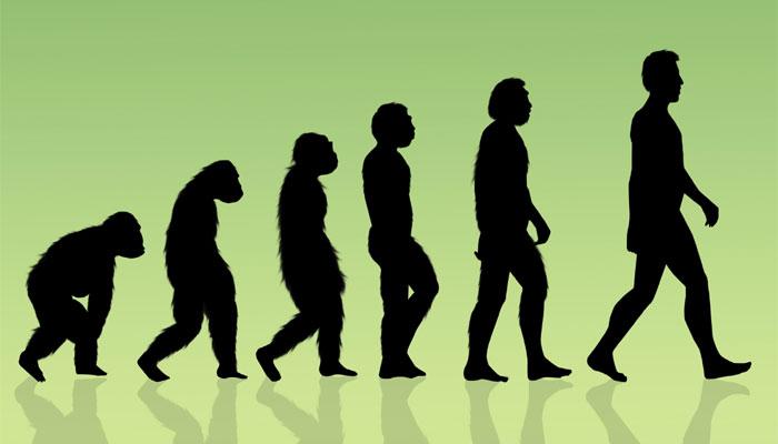 हमारे पूर्वज ऑलराउंडर थे क्योंकि वे पेड़ पर चढ़ने के साथ-साथ सीधे चलने में भी सक्षम थे