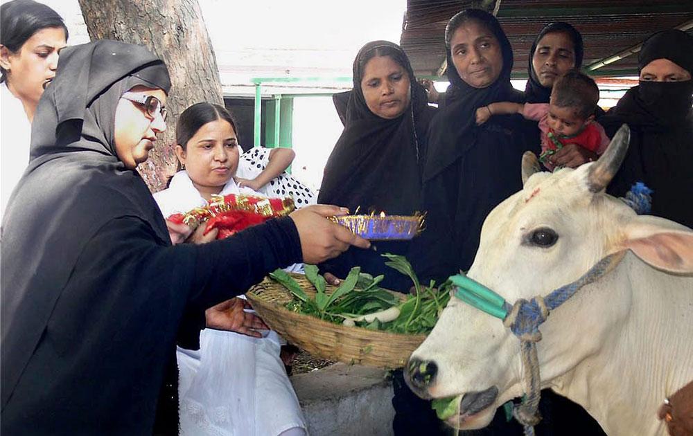 वाराणसी में मुस्लिम मोहल्ला फाउंडेशन की महिलाएं गायोंं को खाना खिलाती हुई और गाय संरक्षण का संदेश देती हुई।
