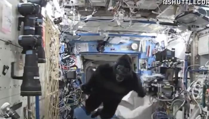 OMG! विशालकाय गोरिल्ला अंतरिक्ष यात्री के पीछे!  VIDEO में देखिए आगे क्या हुआ?