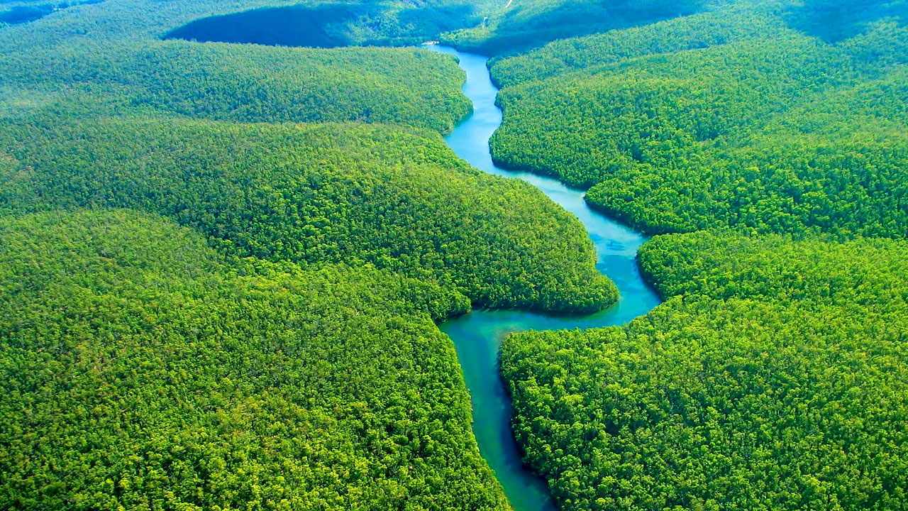 The Amazon Forests