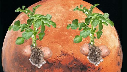 मंगल ग्रह पर की जा सकती है आलू की खेती