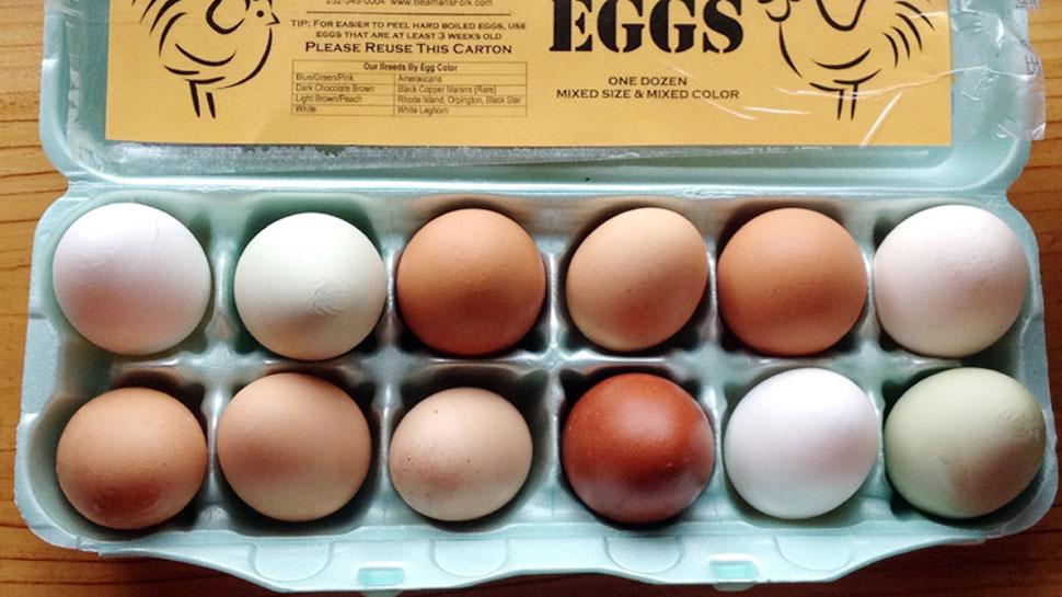 अंडा शाकाहारी है या मांसाहारी? वैज्ञानिकों ने ढूंढ लिया ये जवाब
