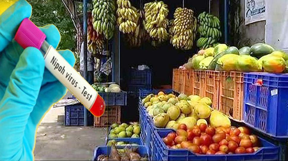 Image result for चमगादड़ को सबसे ज्यादा पसंद है ये फल