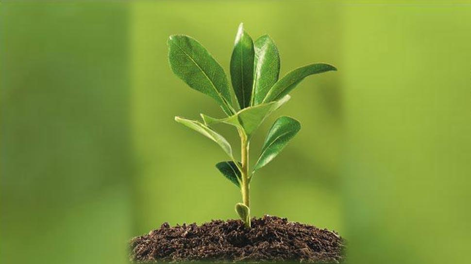इस तकनीक से बनाए जाएंगे 'सेक्सी पौधे', इस काम के लिए होगा इस्तेमाल