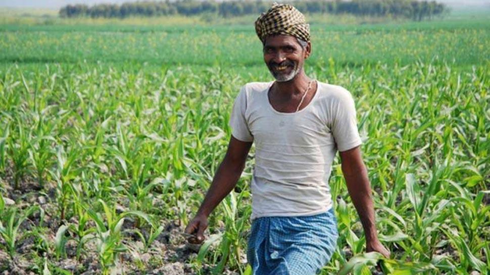 मोदी सरकार ने MSP बढ़ाकर किसानों को किया खुश, अब पहले से ज्यादा होगी आमदानी