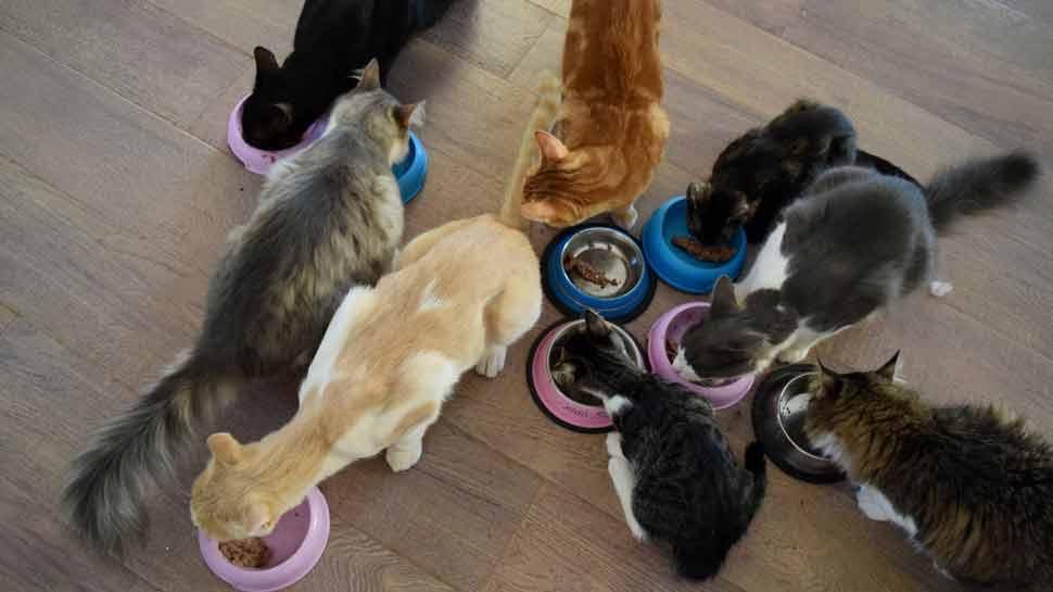 सेंक्चुअरी में 55 बिल्लियां हैं.