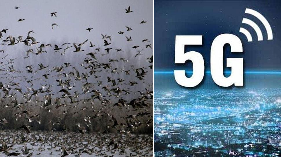 सच साबित हुआ अक्षय कुमार की 2.0 का खतरा! नीदरलैंड में 5G से सैकड़ों पक्षियों की जान गई