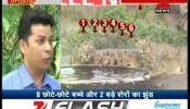 देखें अद्भूत नजारा: गिर वन में एक साथ लाइन में पानी पीते 10 शेर