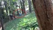 VIDEO: चिड़ियाघर में शेरनी के बाड़े में कूद गया शख्स, रेंगते हुए जा रहा था पास तभी...