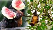 इन 3 फलों से फैल रहा है खतरनाक निपाह वायरस, भूलकर भी न खाएं