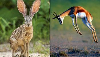 दुनिया में 10 सबसे तेज गति से चलने वाले पशु