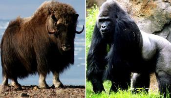 दुनिया के टॉप 10 ताकतवर जानवर