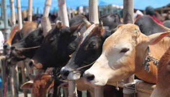पंजाब में अब पशु पालने पर भी देना होगा टैक्स, जानिए क्या हैं दरें