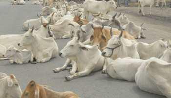 छत्तीसगढ़: पुलिसकर्मियों ने सड़क पर बैठी गाय को जानबूझकर कुचल दिया, वीडियो हुआ वायरल