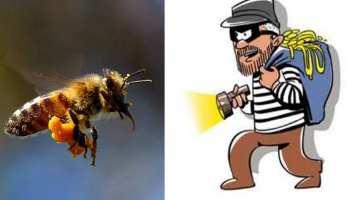 उत्तर प्रदेश में अब मधुमक्खियां चुरा रहे हैं चोर, संभल में सामने आई घटना
