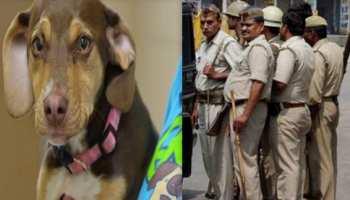 अपराधी पकड़ने में 'फेल', लेकिन कुत्ता खोजने में माहिर है यूपी पुलिस, आगरा में हुई पुष्टि