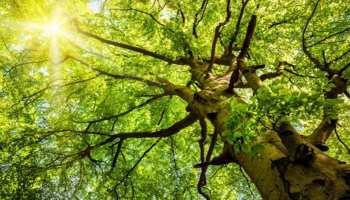 इंदौरः अब पेड़ों का भी बनेगा आधार कार्ड, नगर निगम खर्च करेगा लगभग 1 करोड़