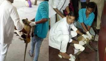 करंट से झुलसे बंदर का कोटा के सबसे बड़े अस्पताल में हुआ इलाज