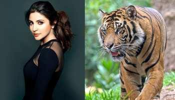 बाघों को बचाने के लिए प्रचार करेंगी अनुष्का शर्मा, डिस्कवरी के साथ हुआ करार