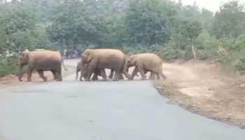 जामताड़ा में बरपा हाथियों का कहर, एक शख्स को कुचला और तोड़ डाले कई घर