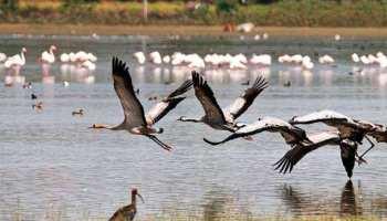 प्रदूषण के कारण कानपुर की जगह गुजरात का रुख कर रहे हैं प्रवासी पक्षी