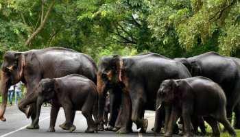 पाकुड़: हाथियों के आतंक से परेशान हैं कई गांव के लोग, 5 लोगों को कुचलकर मारा