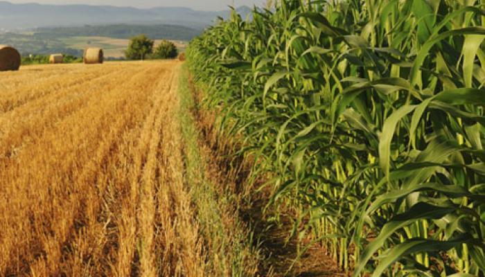 कृषि अनुसंधान, भंडारण पर निवेश, कृषि उपजों का साझा बाजार बनाने पर जोर