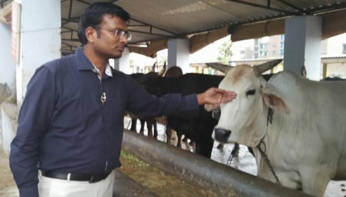 गाय माता है या मांस
