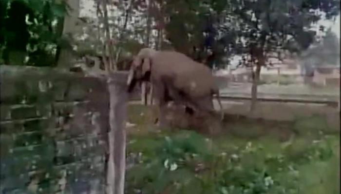 VIDEO में देखें: हाथी ने कैसे मचाया शहर में आतंक, उजाड़ दिए ताबड़तोड़ कई घर!