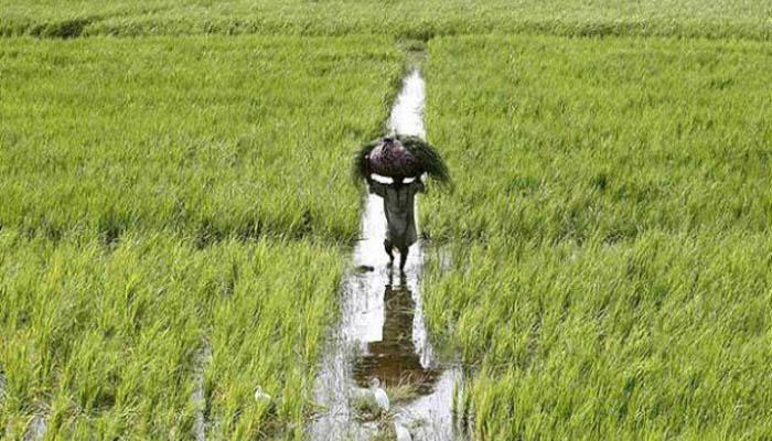 उर्वरक सब्सिडी सीधे किसानों के खातों में पहुंचाने की पहल