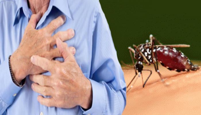 दिल के रोगियों में डेंगू से बढ़ सकती है हृदय संबंधी मुश्किलें