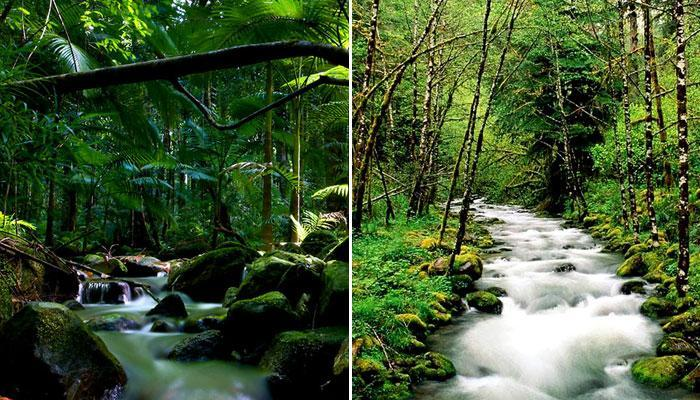 दुनिया के 10 सबसे बड़े जंगल