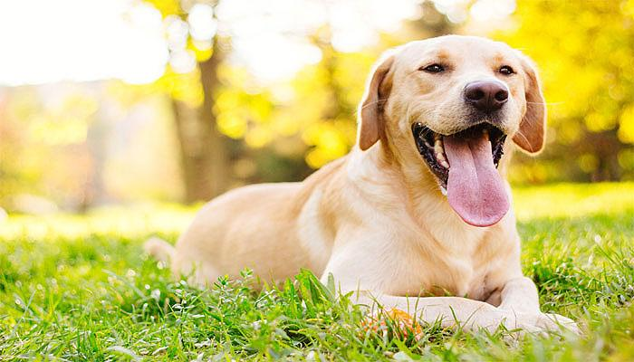 कुत्ते के मुंह पर टेप बांधने वाले व्यक्ति को पांच वर्ष की कैद