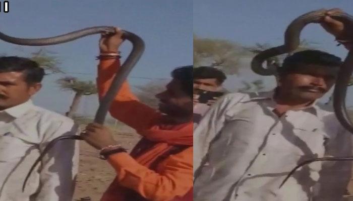 राजस्थान: कोबरा के साथ कर रहा था स्टंट, चली गई जान, WATCH VIDEO