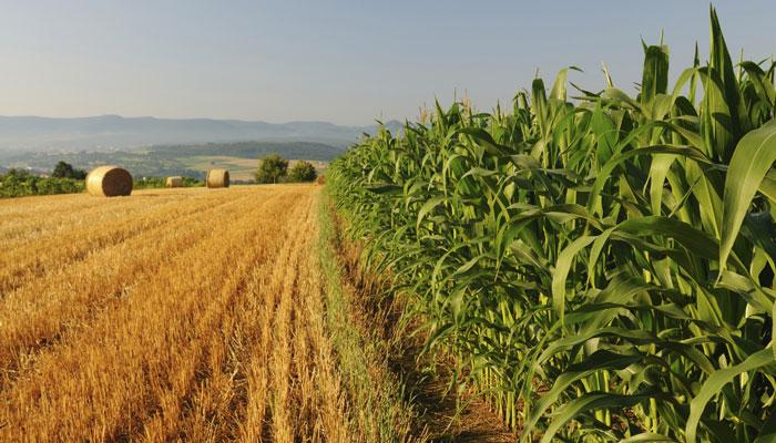 सामान्य मॉनसून से कृषि जीडीपी की वृद्धि 3 से 4% रहने का अंदेशा