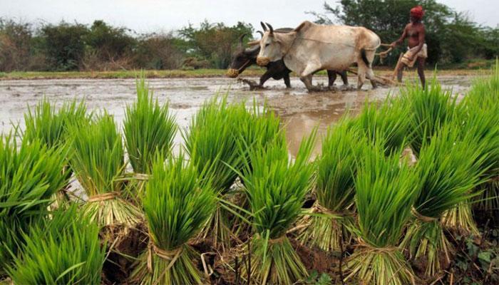 किसानों के लिए राहत! इस साल होगी अच्छी बारिश, 'सामान्य' रहेगा दक्षिण पश्चिम मॉनसून