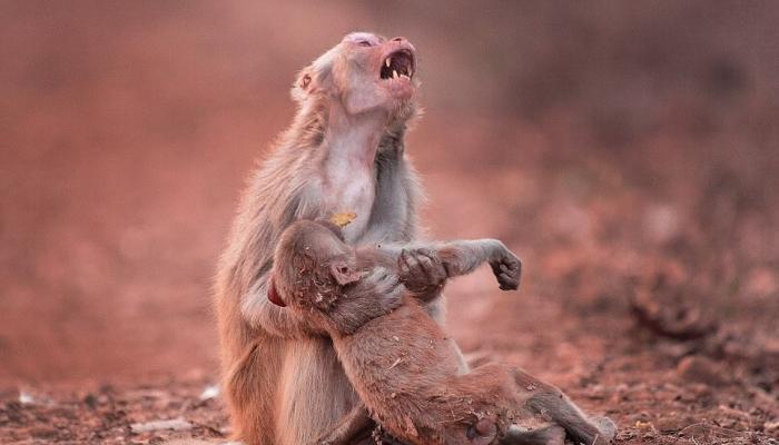 जख्मी बच्चे को लेकर इस कदर रोयी मां, जिसने भी देखा यह मंजर आंखों में आ गए आंसू