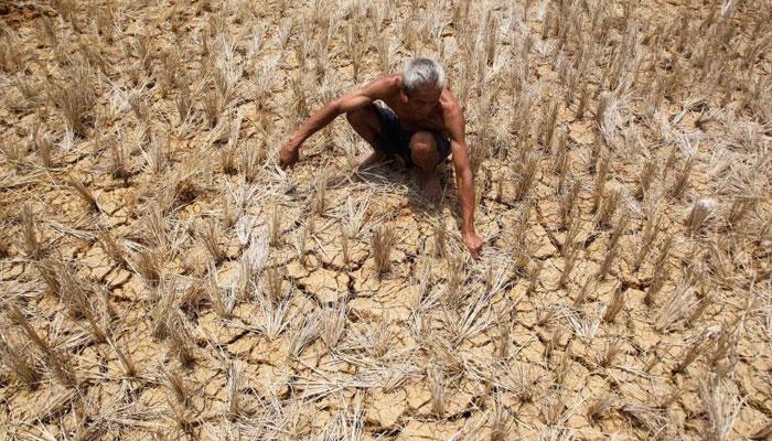 किसान ने पेड़ से फांसी लगाकर की खुदकुशी, पायलट ने भाजपा सरकार पर मढ़ा दोष