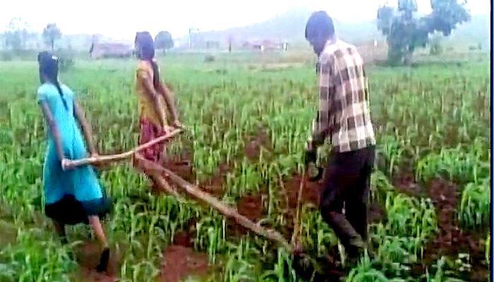 मध्यप्रदेश : खेत जोतने के लिए बैल की जगह लगा दी बेटियां!