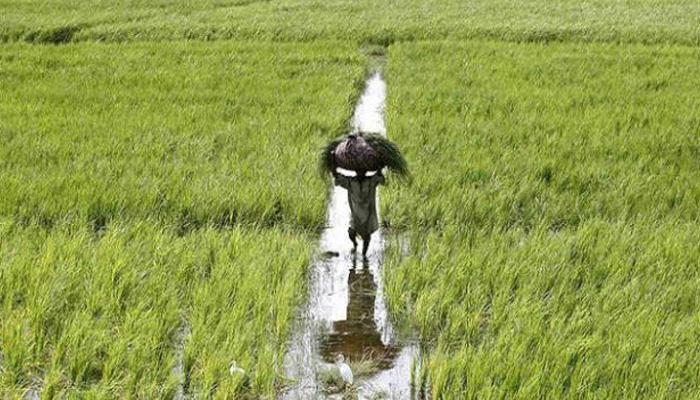 अर्थव्यवस्था की सबसे बड़ी ताकत है कृषि: गडकरी