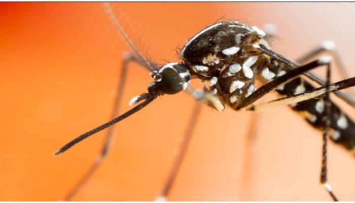 बढ़ रहे हैं डेंगू के मामले, यहां पढ़ें इससे जुड़ी भ्रांतियां और तथ्य