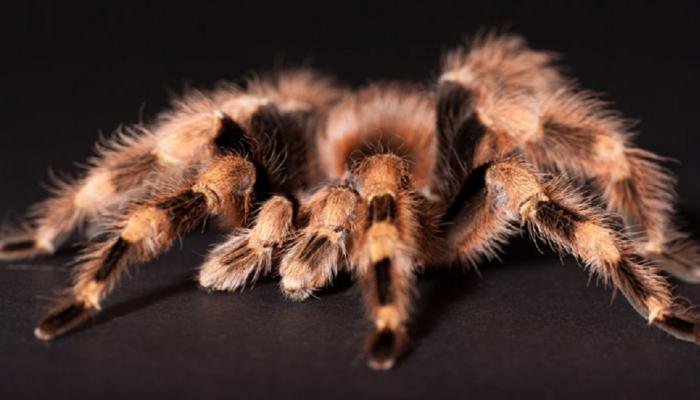 अब बराक ओबामा और हॉलीवुड सेलिब्रिटी के नाम से जानी जाएंगी मकड़ियां